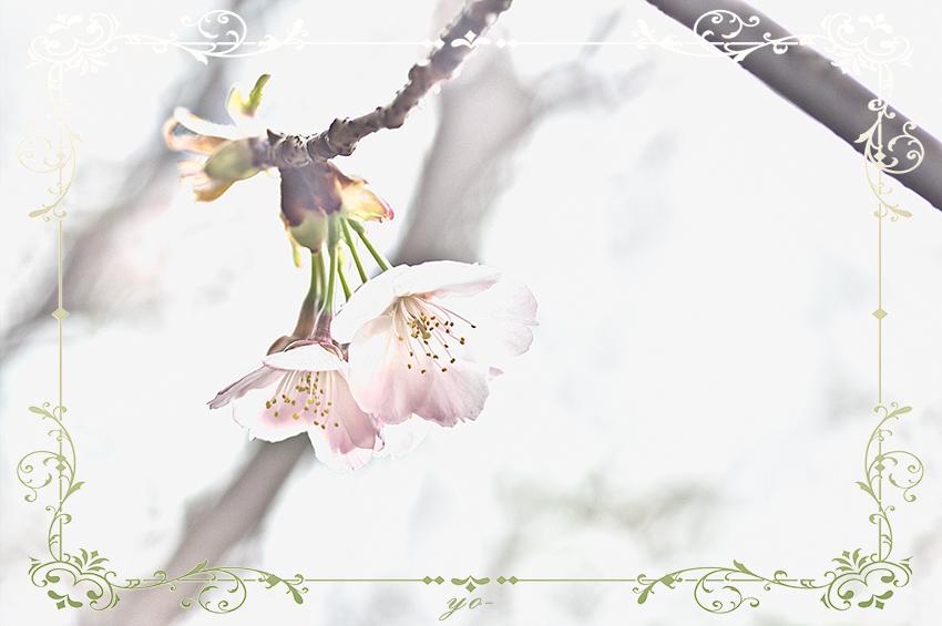 IMGP4631-Edit.jpg