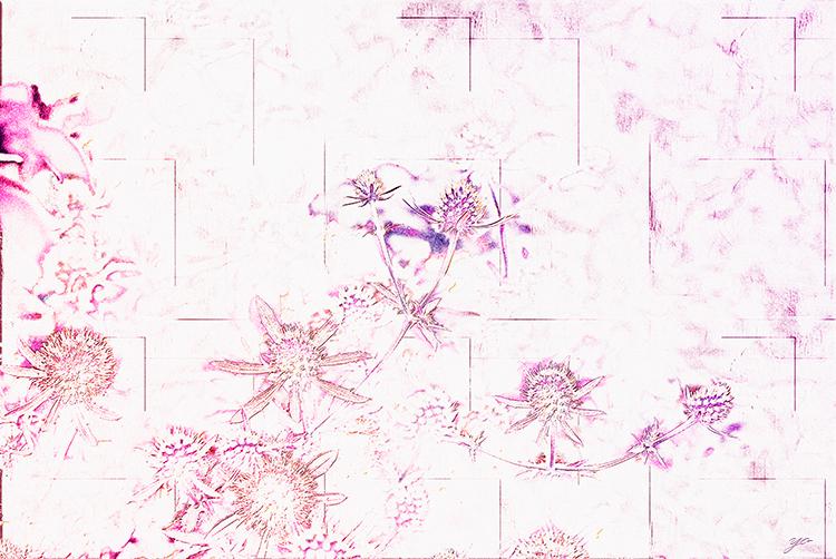 IMGP6063-Edit-Edit222.jpg