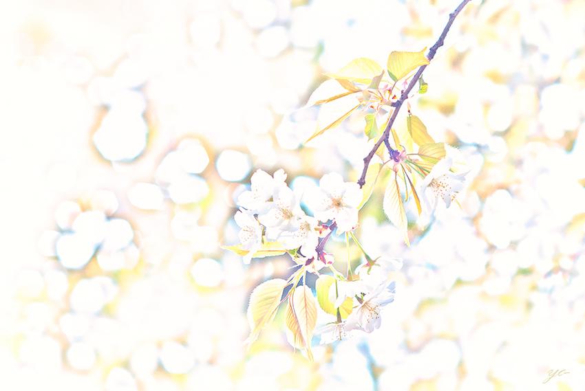 IMGP9797-Edit.jpg