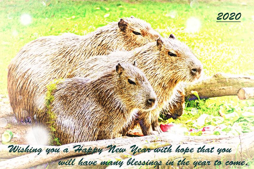 photo-of-3-capybara-standing-near-wooden-branch-and-grass-160583.jpg